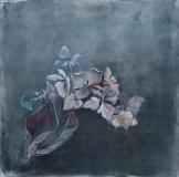 Ann Warren Hydrangeas study